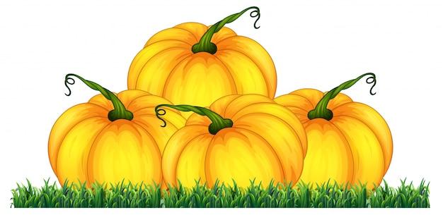Isolated pumpkin on white background Premium Vector