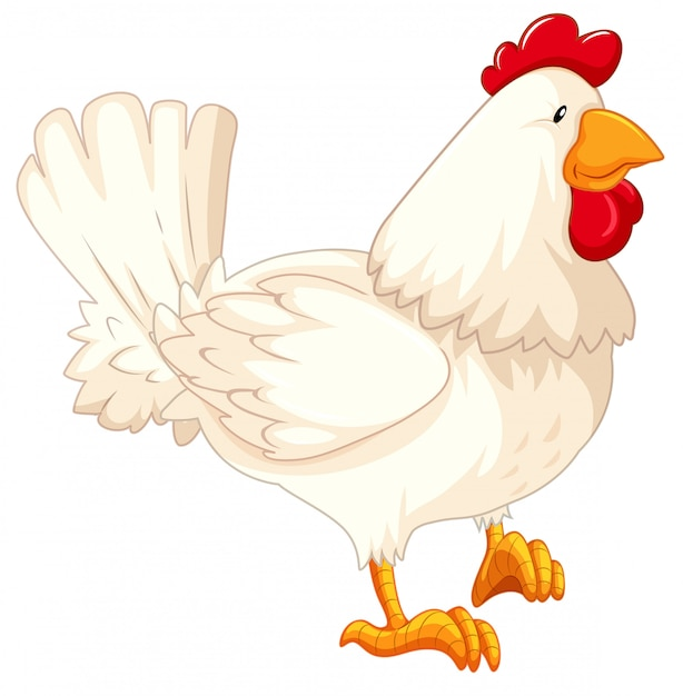 Isolated rooster cartoon Free Vector