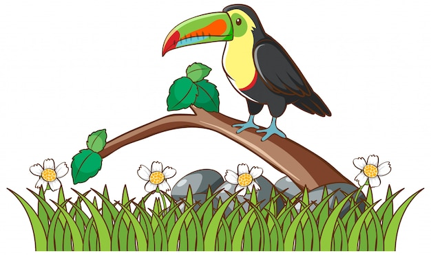 Isolated toucan on branch Free Vector
