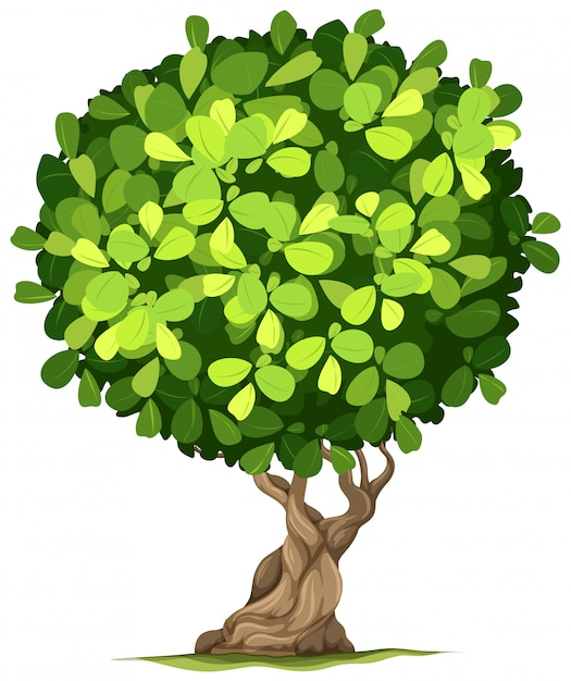An isolated tree on white background Free Vector