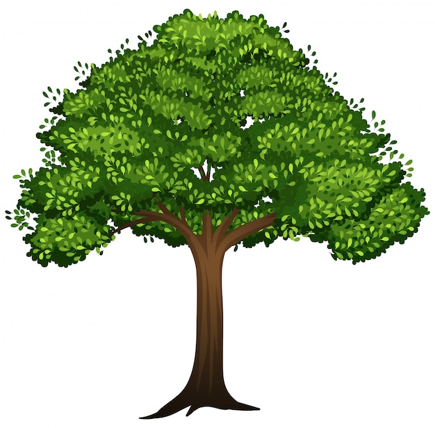 A isolated tree on white background Free Vector