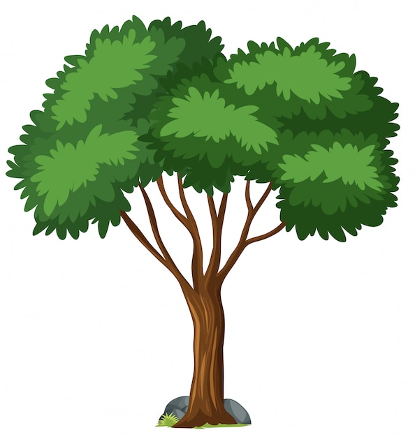 Isolated tree Free Vector