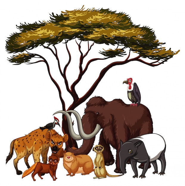 Isolated  wild animals under the tree Free Vector