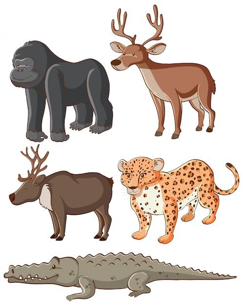 Animali selvatici isolati Vettore gratuito