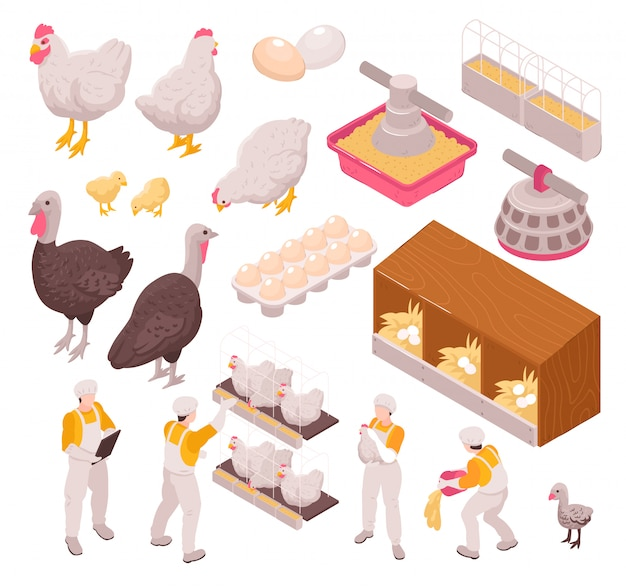 Isometric chicken production poultry farm set with isolated images of human workers and farm animals eggs Free Vector