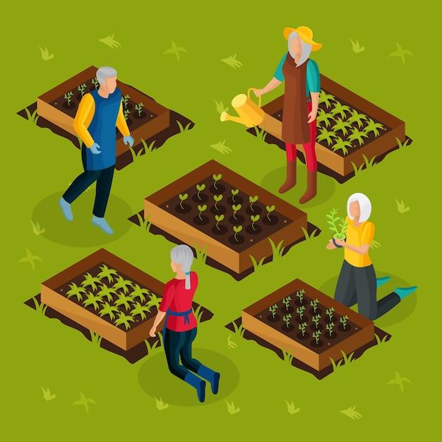 Pensionati isometrici che lavorano nel modello di giardino con pensionati che coltivano e coltivano diverse piante orticole Vettore gratuito