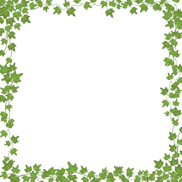 Ivy vines with green leaves. floral  rectangular frame isolated on white Premium Vector
