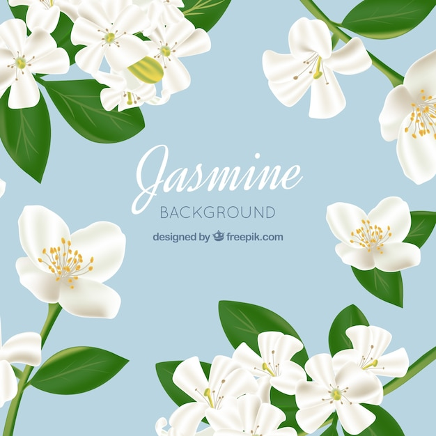 jasmine background in realistic style vector free download