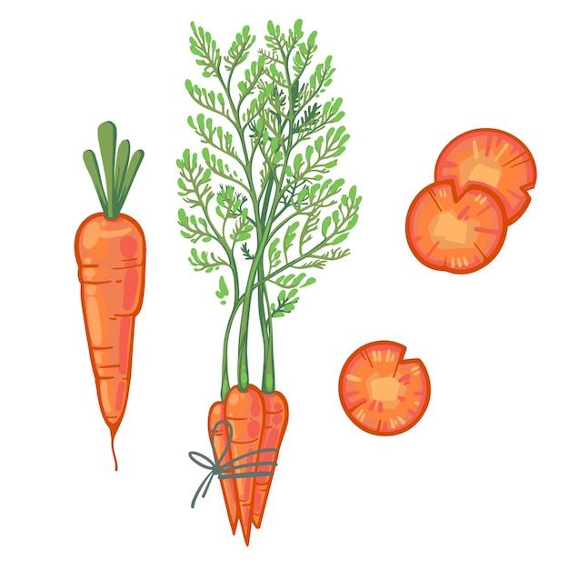 Сочная оранжевая морковь, пучок моркови, морковные дольки. свежий мультяшный овощ. Premium векторы