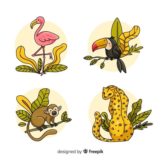 ジャングルの動物セット:フラミンゴ、オオハシ、サル、ヒョウ 無料ベクター