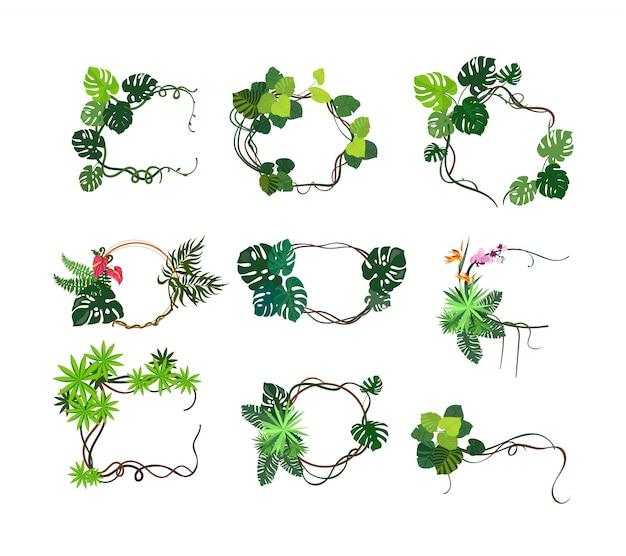 ジャングル植物フレームセット 無料ベクター