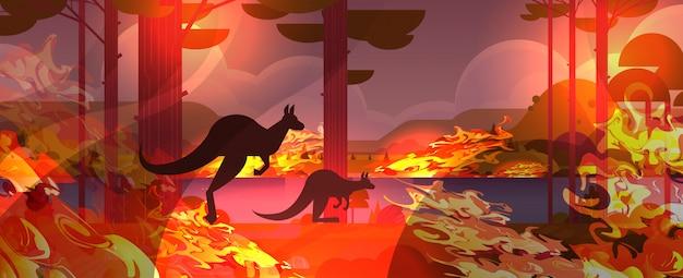 Кенгуру бежит от лесных пожаров в австралии животные умирают в лесном пожаре кустарник огонь горящие деревья концепция стихийного бедствия интенсивное оранжевое пламя горизонтальное Premium векторы