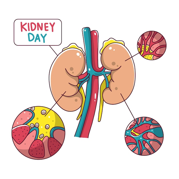Kidney day Premium Vector