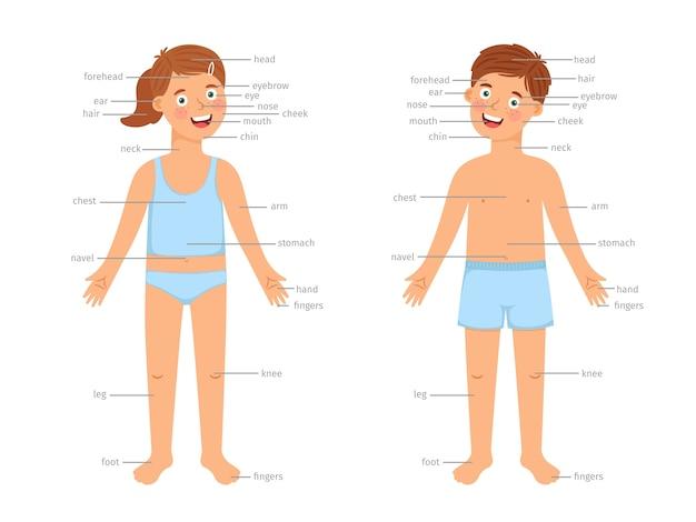 Детские части тела инфографики. векторная инфографика образования человеческого тела с мультяшными мальчиками и девочками и текстовыми метками, изолированными на белом фоне Premium векторы