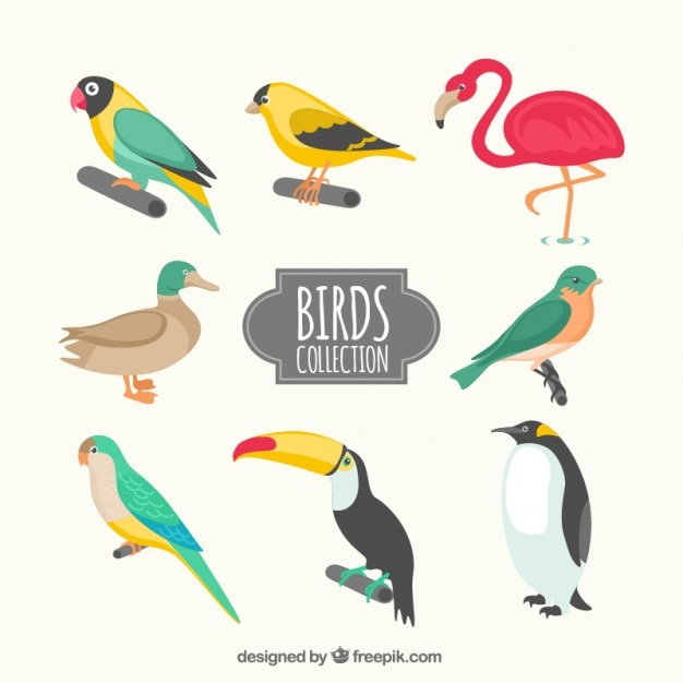 Kinds of birds collection Free Vector