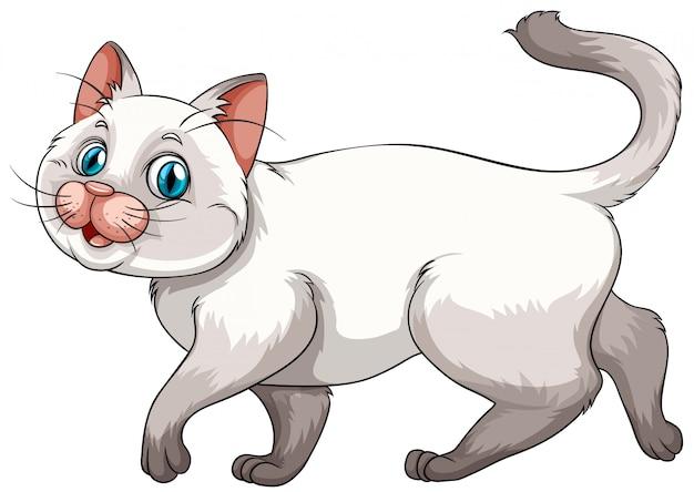 Kitten Free Vector