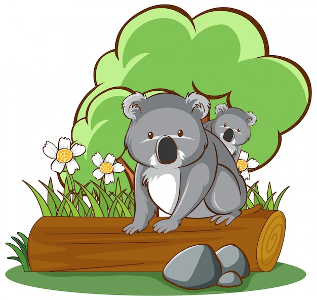 Koala sul fondo bianco di collegamento Vettore gratuito