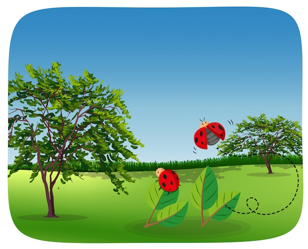 Ladybug in nature landscape Free Vector