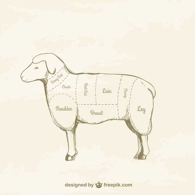 Lamb cuts drawing Free Vector
