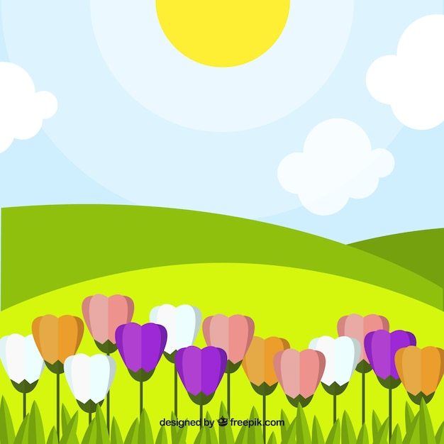 Landscape background with colorful\ tulips