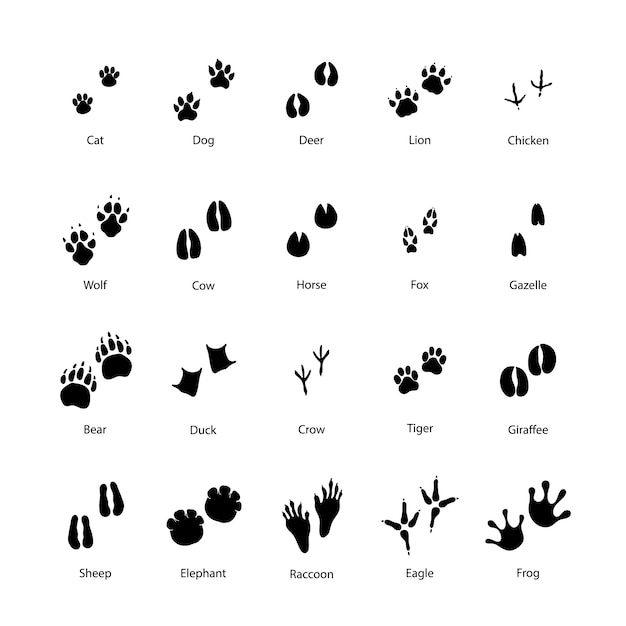 Large set of animal and bird silhouettes of steps imprints on white Premium Vector
