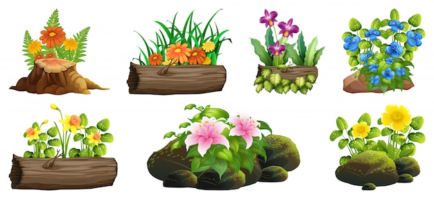 Large set of colorful flowers on rocks and wood Free Vector