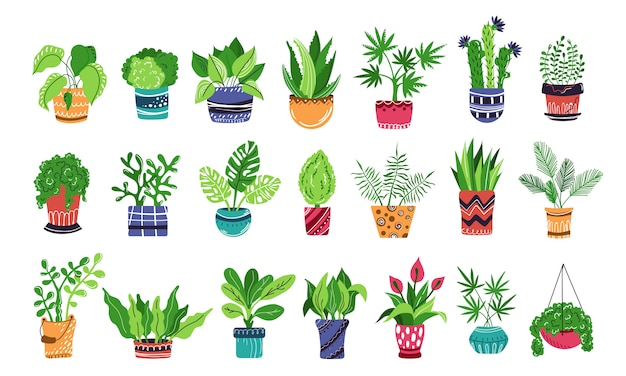 Large set of home potted plants or flowers Premium Vector