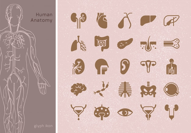 Large set of linear  icons of human internal organs with signatures. suitable for print, web and presentations. Premium Vector