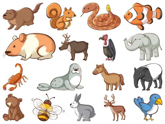 Grande insieme di fauna selvatica con molti tipi di animali Vettore gratuito
