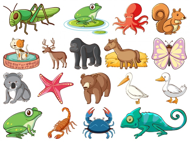 Large set of wildlife with many types of animals Free Vector