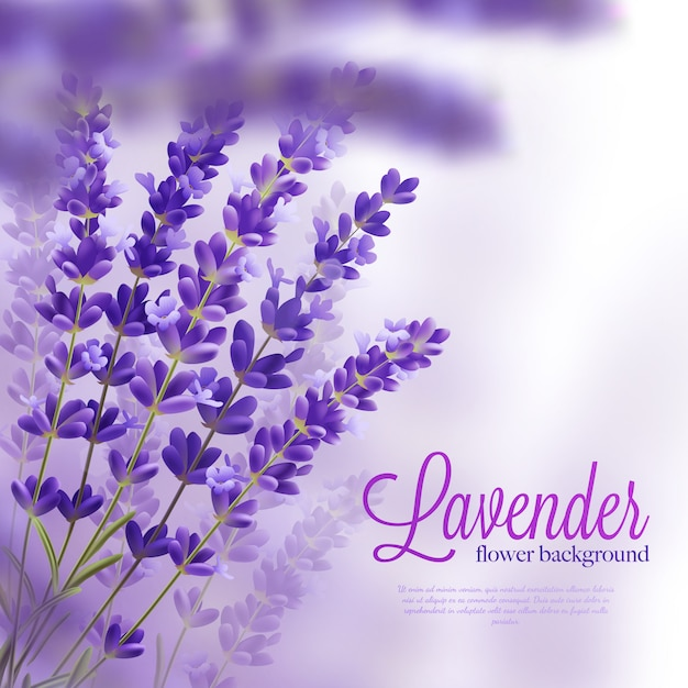 Lavender branches realistic background Free Vector