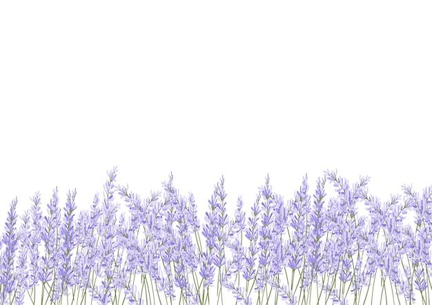 Lavender flower filed Premium Vector