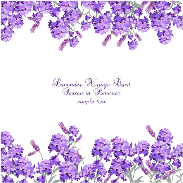 lavender vintage card vector free download