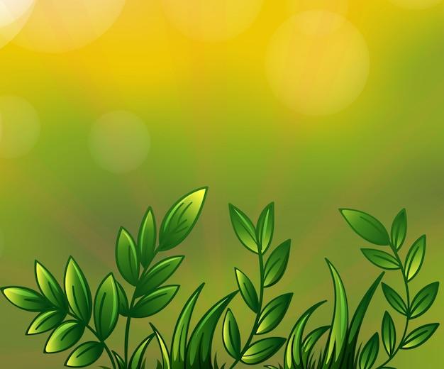 葉の多い植物 無料ベクター