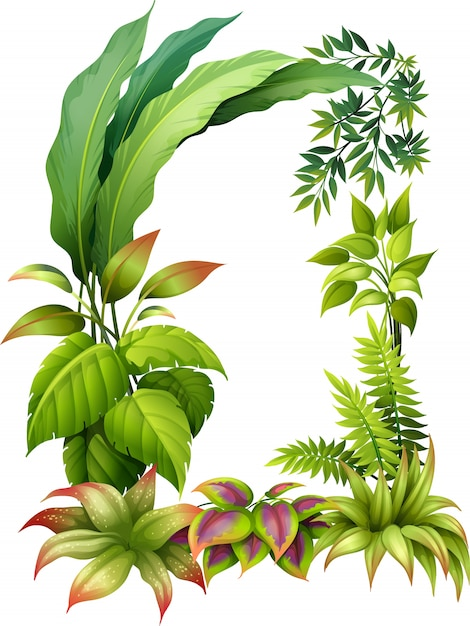 Leafy plants Free Vector