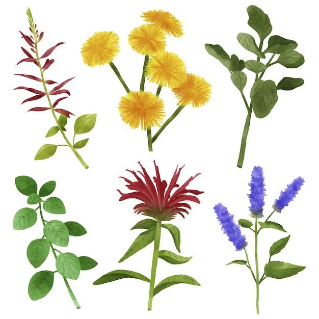 Коллекция листьев и цветов Бесплатные векторы