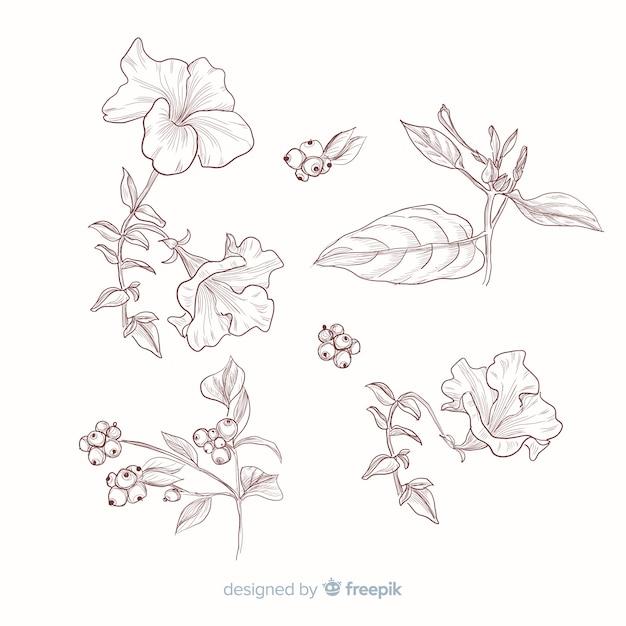 植物のコレクションのための葉と花 無料ベクター