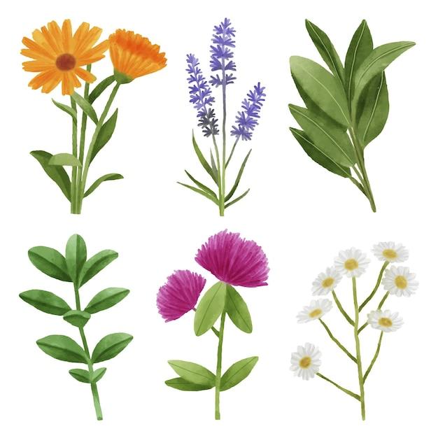 잎과 꽃 세트 무료 벡터
