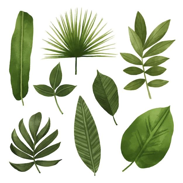 Концепция сбора листьев Premium векторы