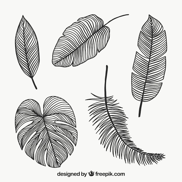 Leaves collection in monolines Free Vector