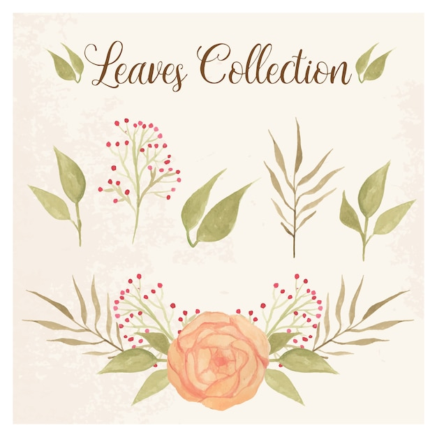 Leaves collection with peony and berries Premium Vector