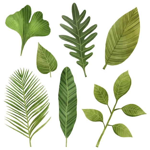 Коллекция листьев Premium векторы