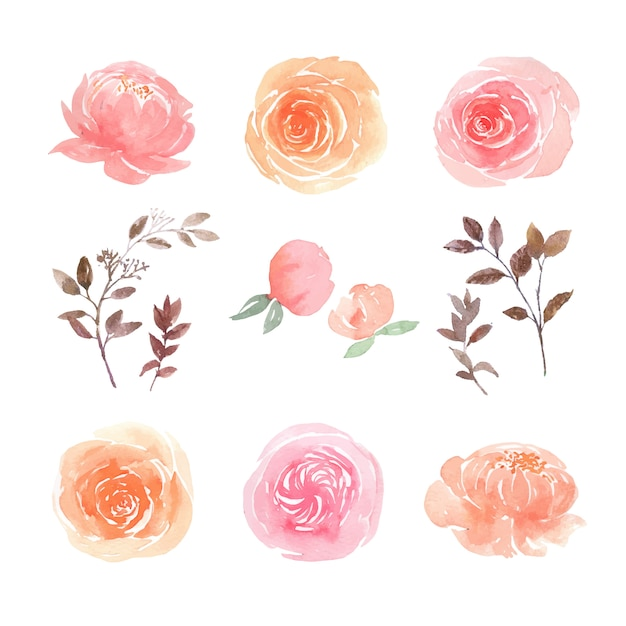 Leaves and floral watercolor elements set hand painted lush flowers, illustration of  flower. Free Vector