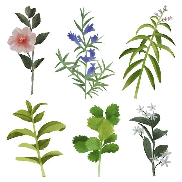 Confezione di foglie e fiori Vettore gratuito