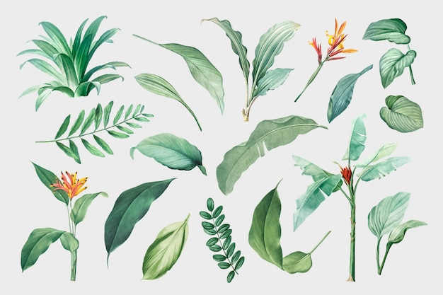 Leaves set Free Vector