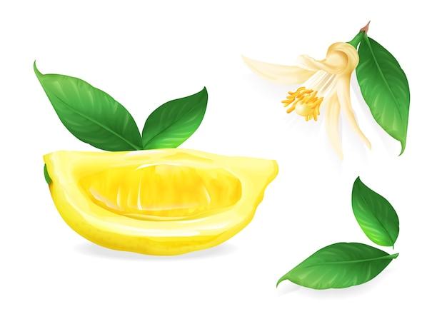 Lemon illustration of citrus fruit botanical flower and leaf. Free Vector