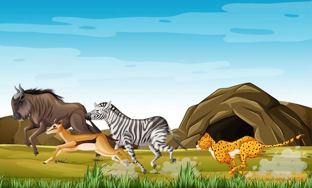 Охота на леопарда животных в мультяшный персонаж на фоне леса Бесплатные векторы