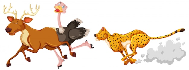 ヒョウ狩りのダチョウと白い背景の上の漫画のキャラクターの鹿 無料ベクター