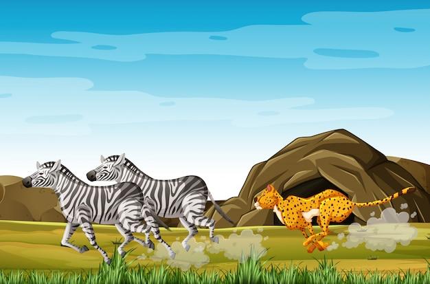 Zebre di caccia del leopardo nel personaggio dei cartoni animati sui precedenti della foresta Vettore gratuito