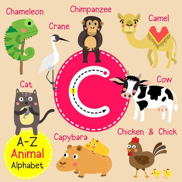 手紙c動物園のアルファベット Premiumベクター